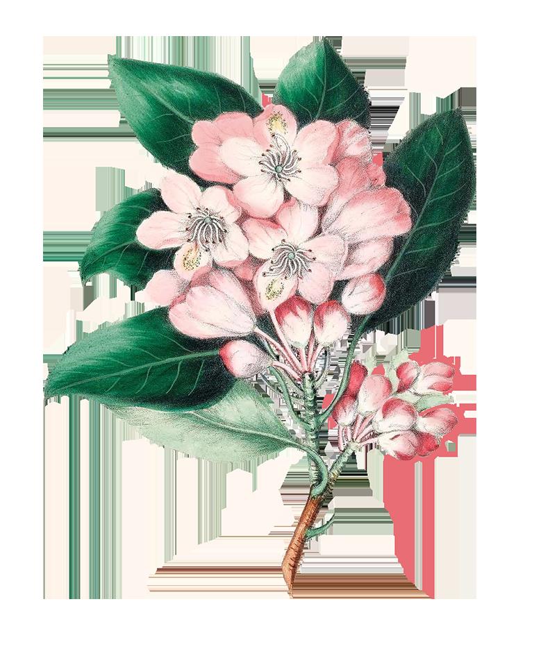 apple blossoms digital scrapbooking