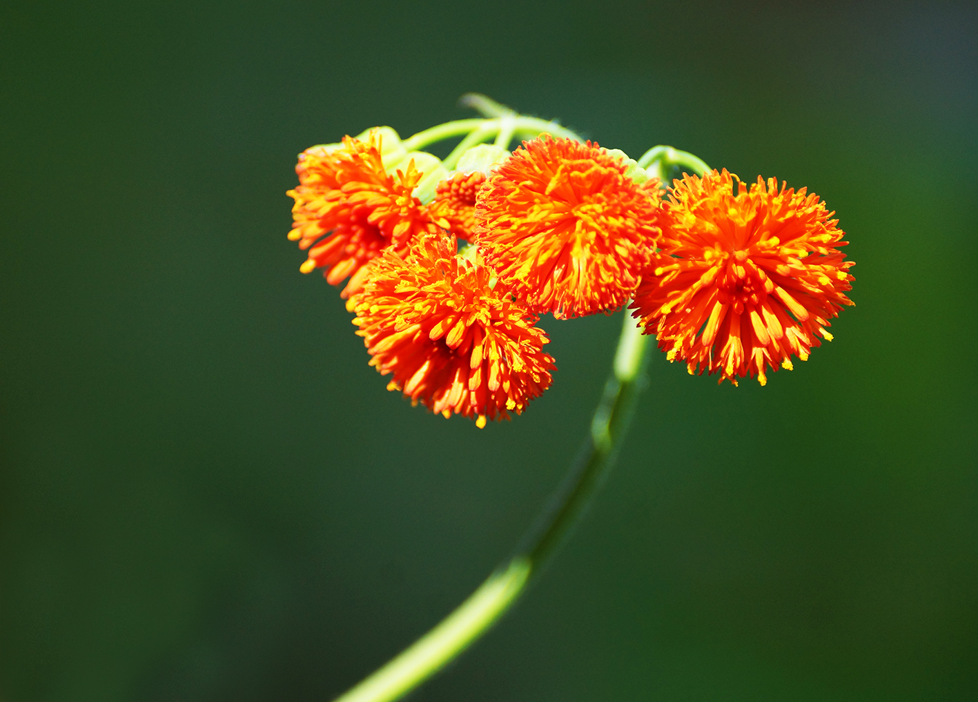 artistic orange flower picture