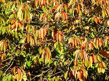 autumn clipart beautiful fall leaves