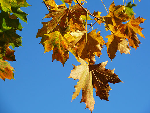 Autumn branch against the blue sky