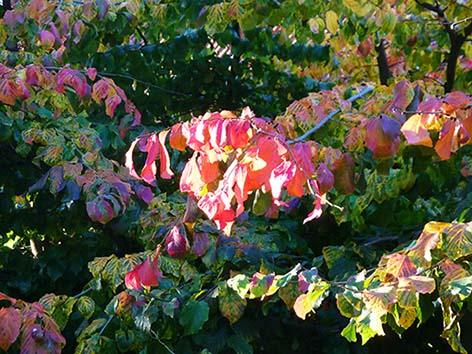 autumn clipart branch