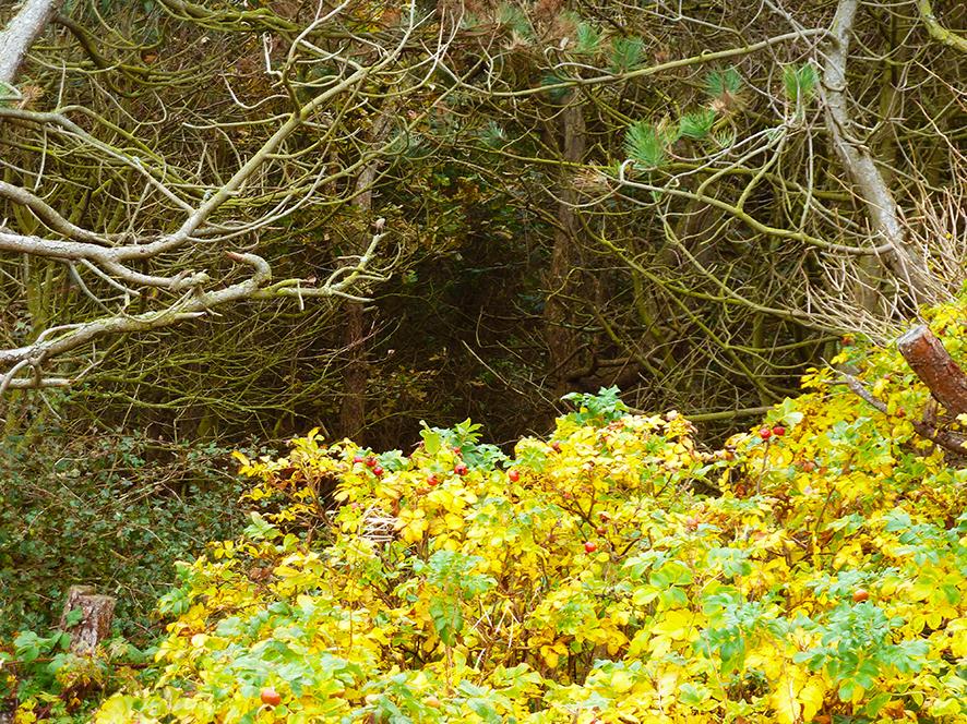 autumn clipart yellow bush trees