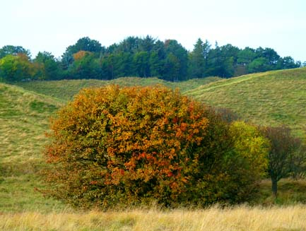 first day of fall tree on moorland