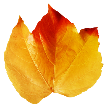 red and yellow autumn leaf clipart