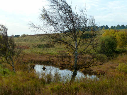 moorland in fall october