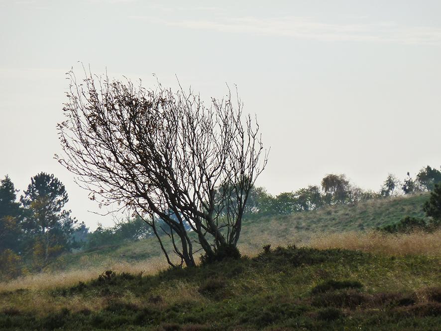 autumn moor landscape naked tree
