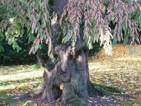 strange autumn clipart tree