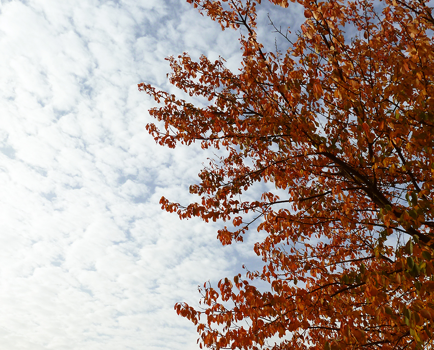 autumn tree against clouded sky