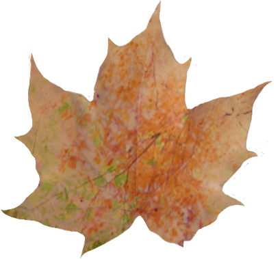 autumn leaf with scenery