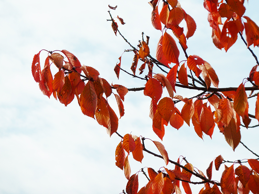 fall scenery with branch with red leaves