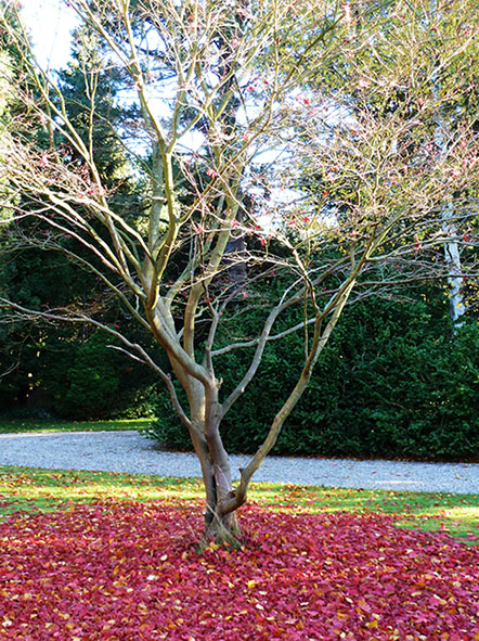 autumn tree surrounded with red leaves