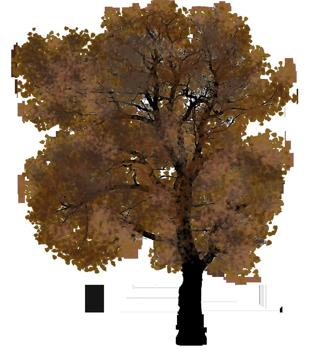 autumn tree clipart
