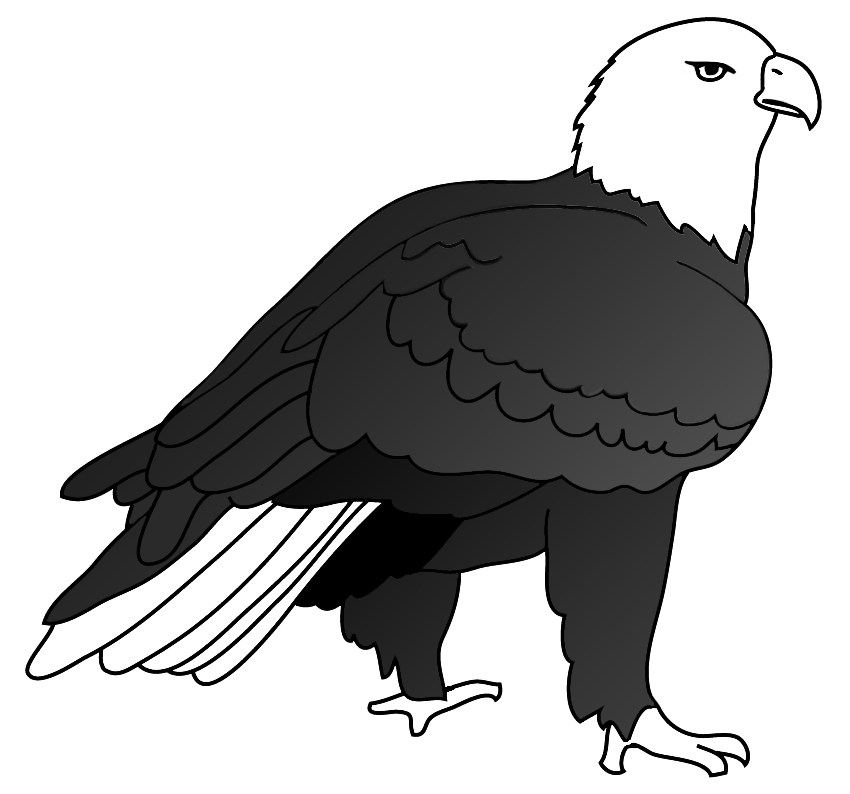 drawing of bald eagle on ground