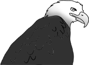cool drawings bald eagle