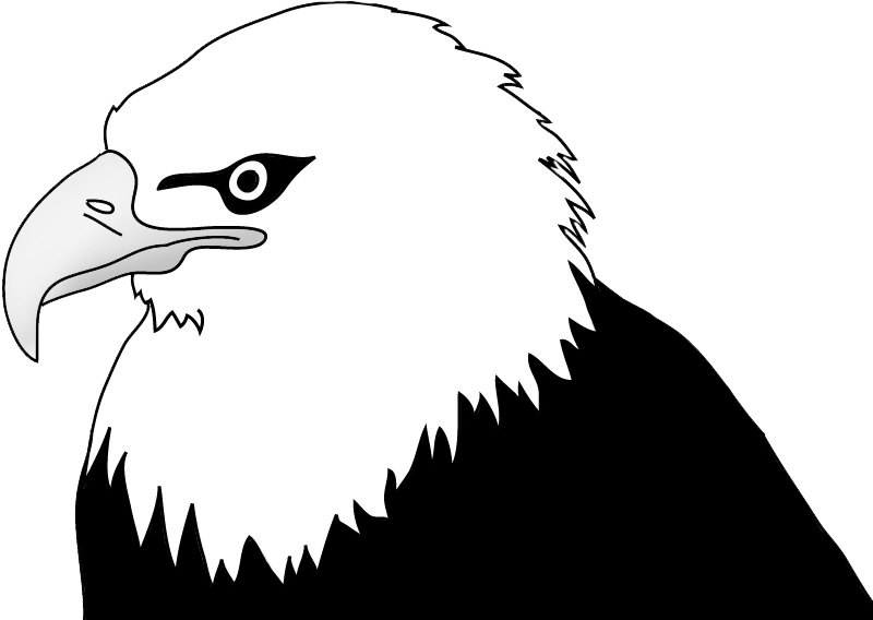 bald eagle head illustration