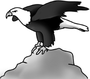 bald eagle drawings on rock
