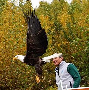 bald eagle released after rehabilitation