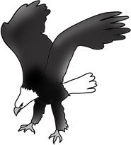 Hunting bald eagle black white sketch