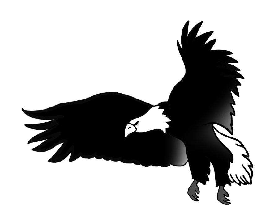 black white drawing flying bald eagle