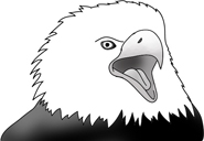 head of bald eagle screaming