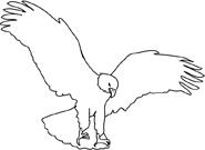 bald eagle landing sketch