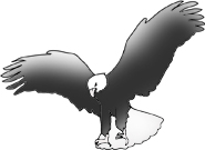 bald eagle landing drawings