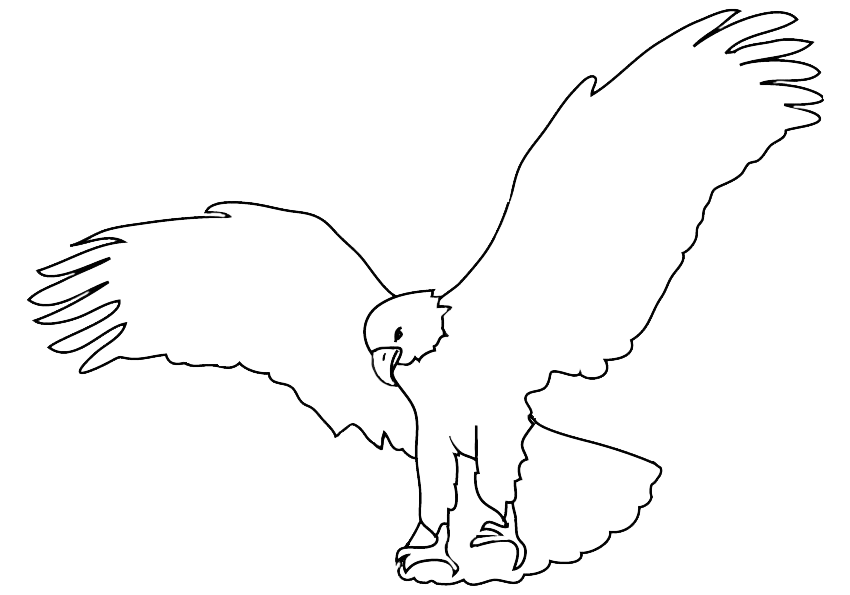 sketch of bald eagle landing