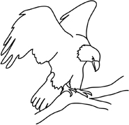 bald eagle drawings on branch
