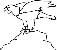 american bald eagle black white