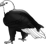 bald eagle drawings picture