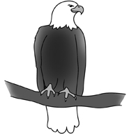 bald eagle drawings sitting eagle