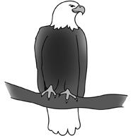 bald eagle drawings sitting eagle