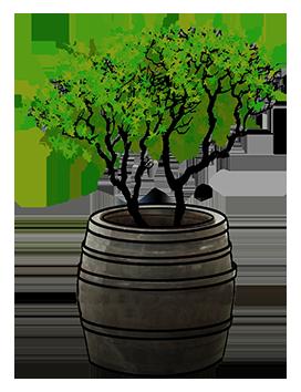 barrel with tree