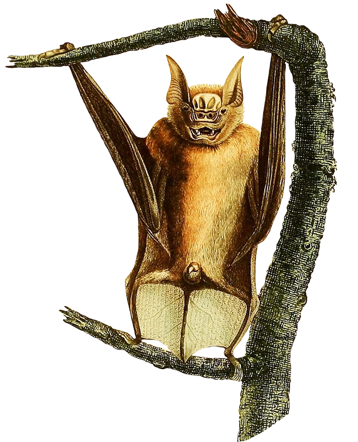 Bat in a tree