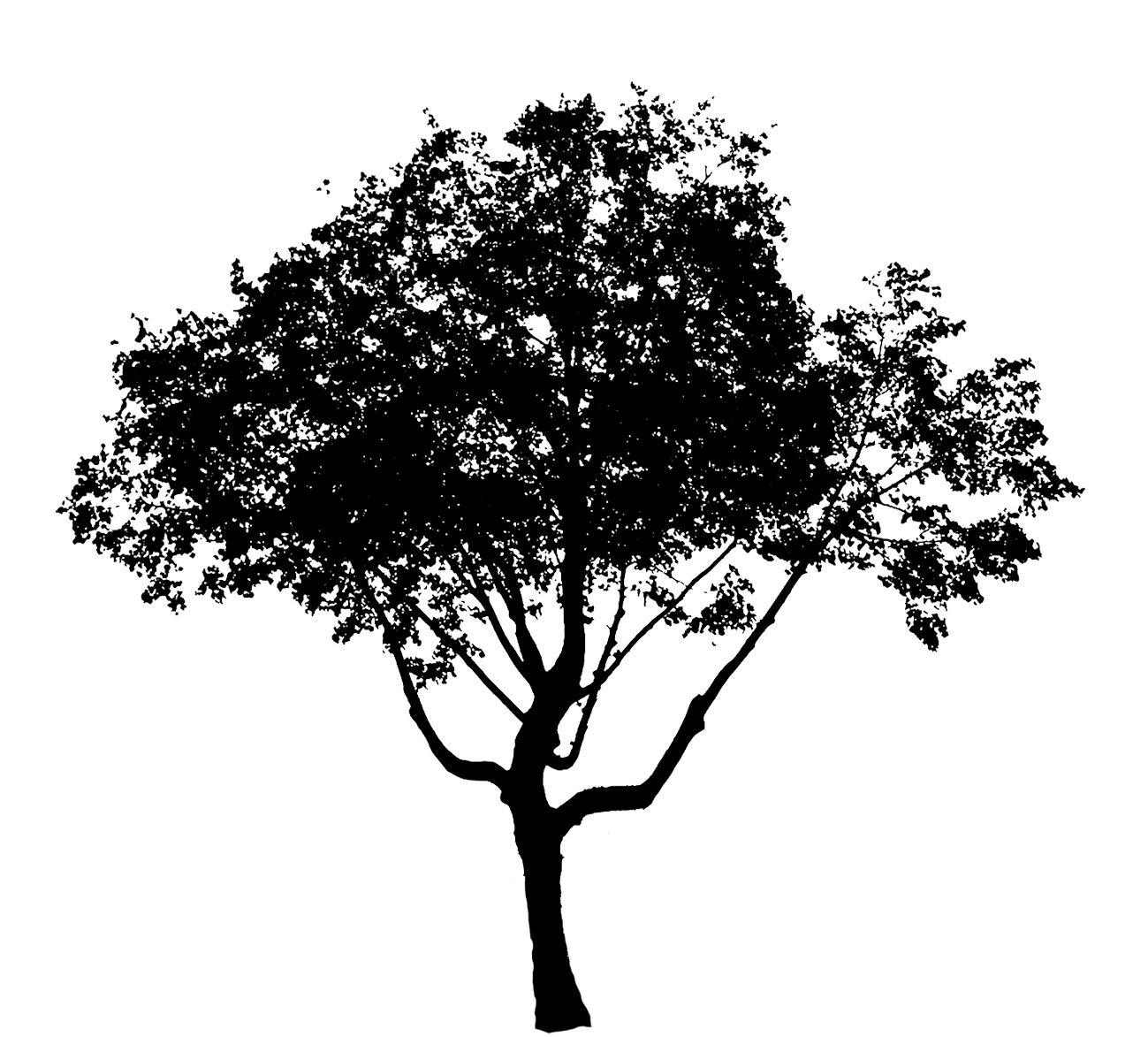baum silhouette png