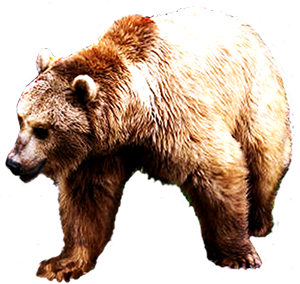 picture of brown bear clip art