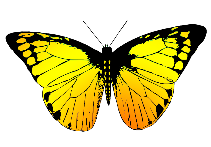 beatifully colored butterfly drawing