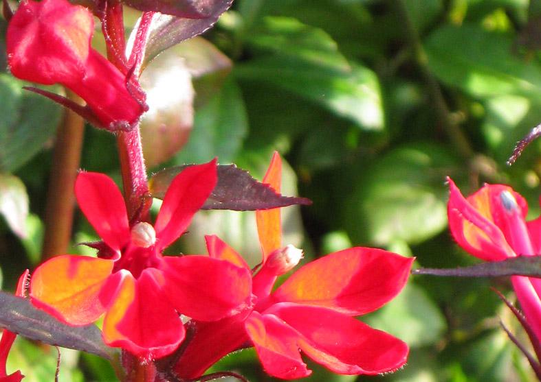 beautiful flower pics red flower