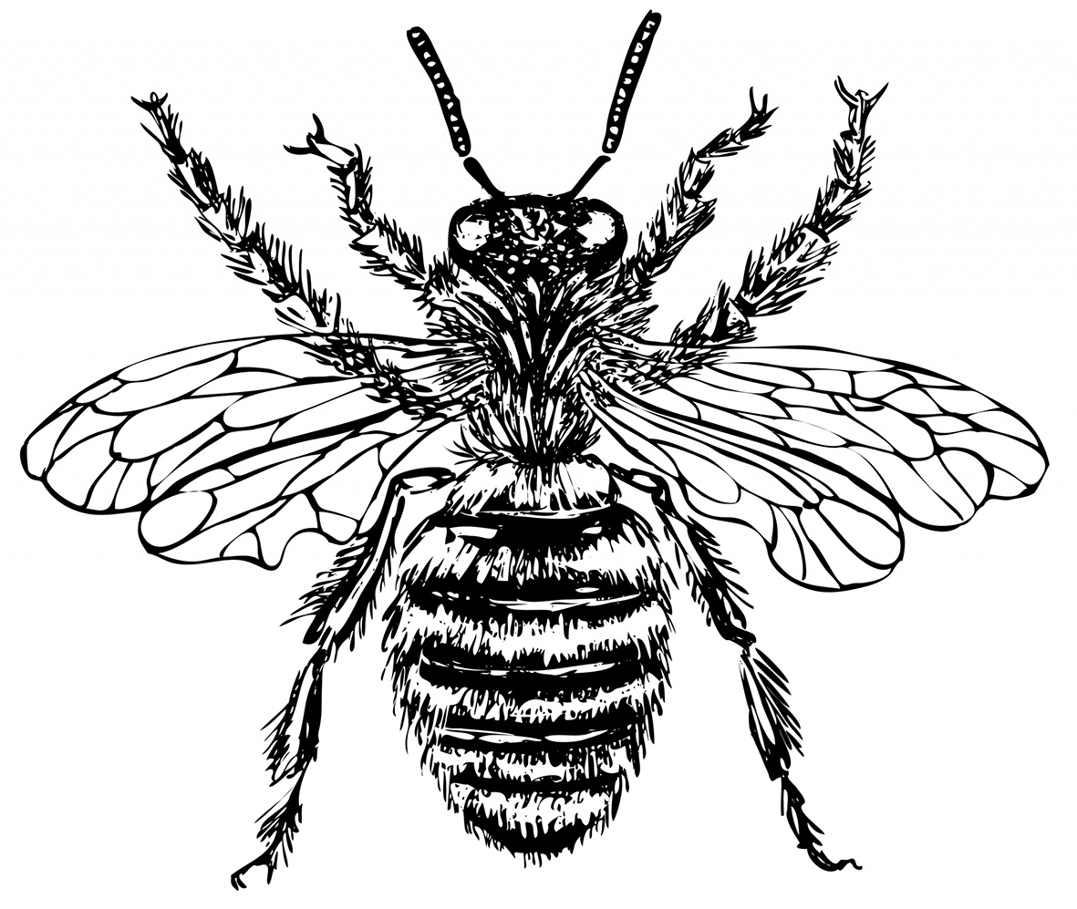 Bee drawing illustration
