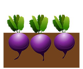 beetroot bed clipart