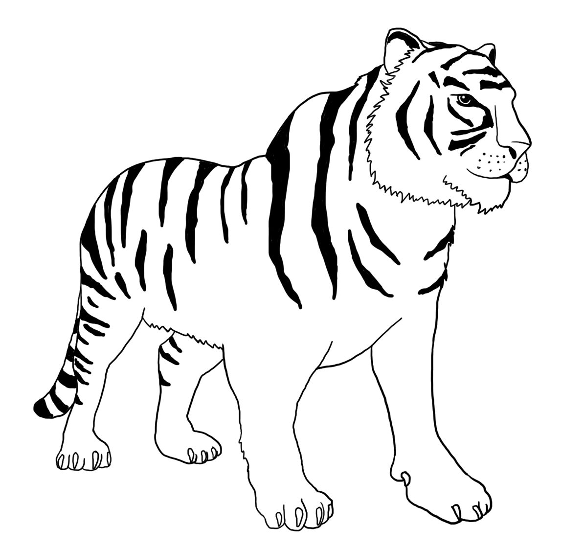 bengal tiger coloring page