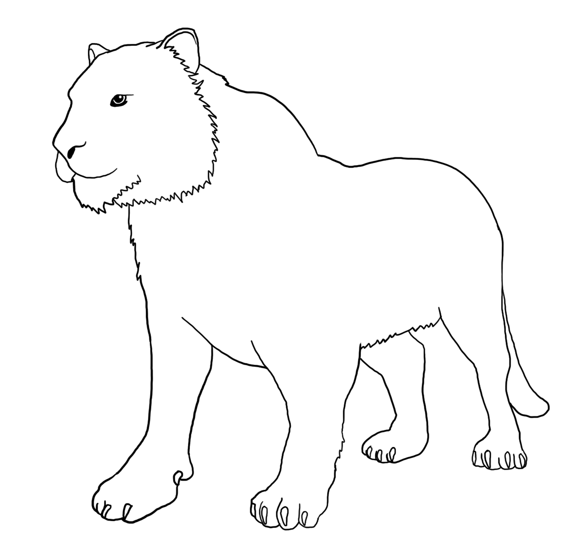 tiger without stripes for coloring