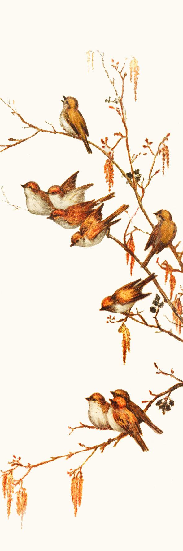bookmark with birds