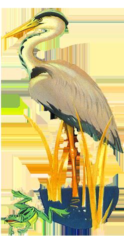 Drawing of heron and frog