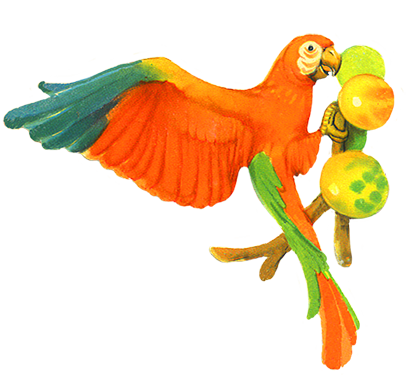 Parrot eating fruits clip art