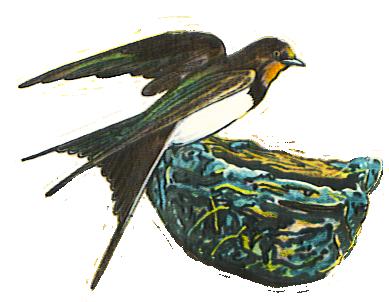Swallow clip art