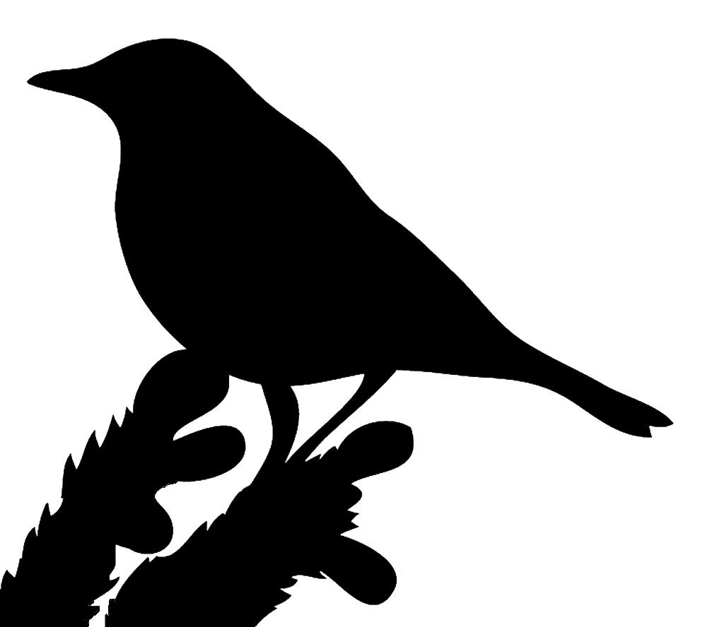 black silhouette bird on branch