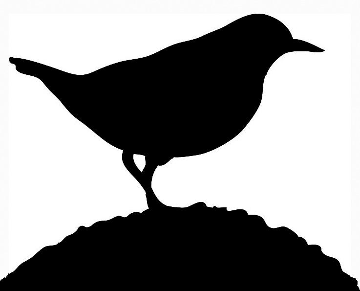 bird silhouette small bird on grass