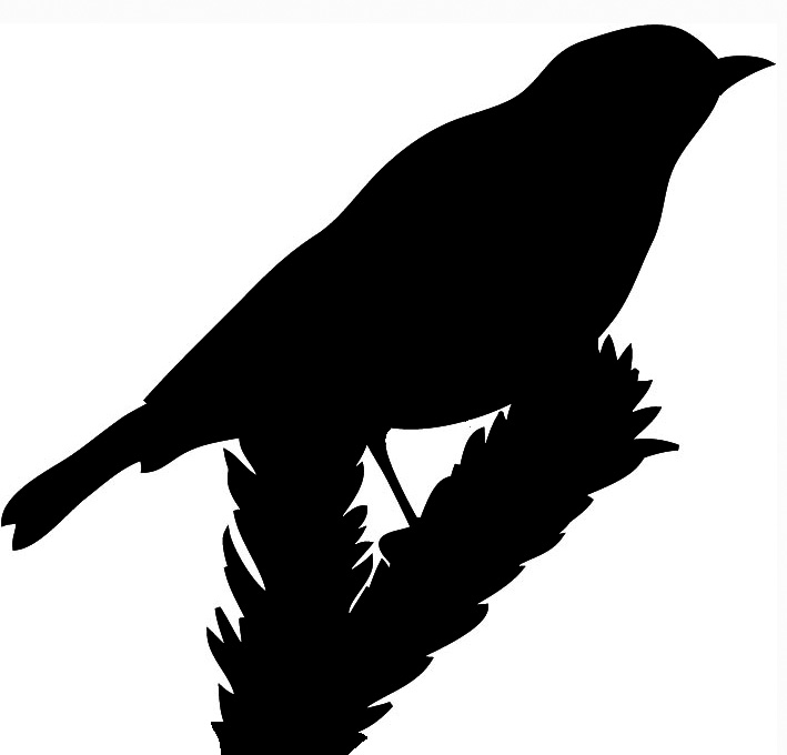 bird sitting on spruce branch