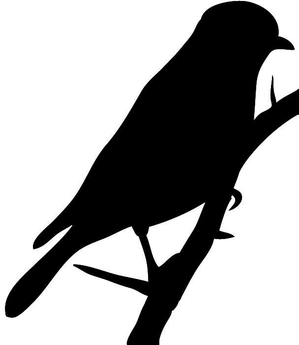 silhouette of bluebird black